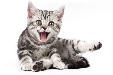 Catfriendly  Veterinary News & Views