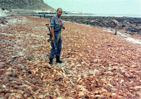Red Tide Outbreak On Garden Route  Iol News