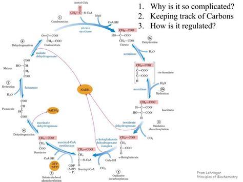 lehninger principles  biochemistry powerpoint