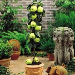 Growing Dwarf Fruit Trees Indoors