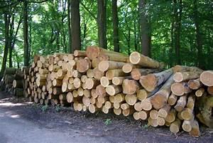 Kubikmeter Berechnen Holz : forstwirtschaft archive waldwissen wald pflanzen ~ Yasmunasinghe.com Haus und Dekorationen