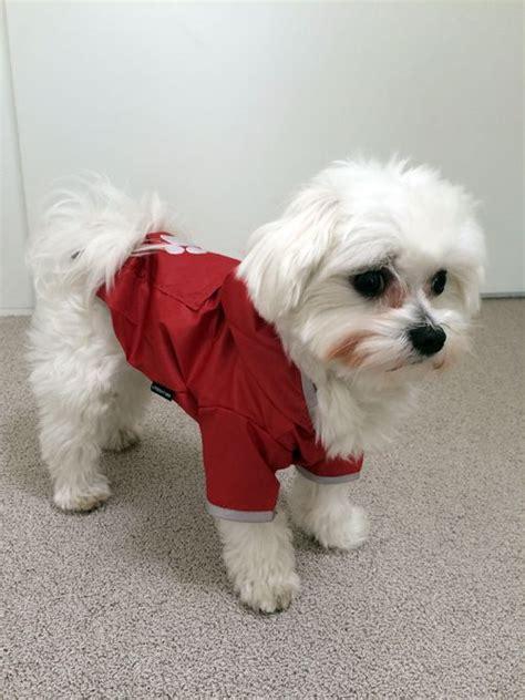 regenmantel für hunde mit bauchschutz 183 hundebekleidung regenmantel f 252 r optimalen regenschutz