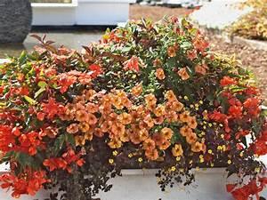 Balkon Pflanzen Ideen : sommerliche bakon bepflanzung in orange ~ Whattoseeinmadrid.com Haus und Dekorationen