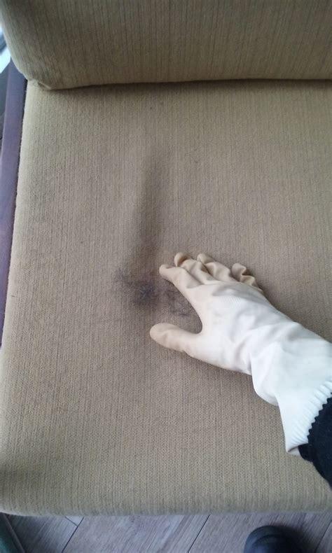 urine de chien sur tapis enlever urine de chat sur canape 28 images urine de chat sur un canap 233 terre de sommi 232