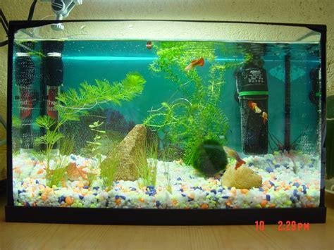 aquarium eau douce 20l
