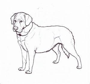 Labrador by nikkiburr on DeviantArt