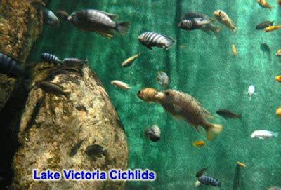 evolution list macroevolution examples  evidence