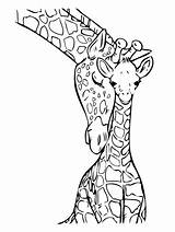 Giraffe Coloring sketch template