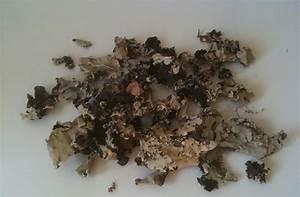 Konkani Foodie: Stone Flower (Dagad Phool)