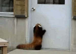 Jump As It Might, This Little Red Panda Just Can't Seem To ...