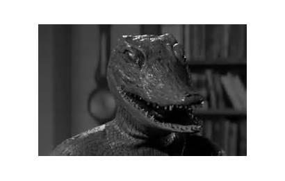 Alligator 1959 Hiroshima Ant Alligators Walking Tragedy