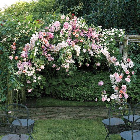 orchid wedding flower ideas martha stewart weddings