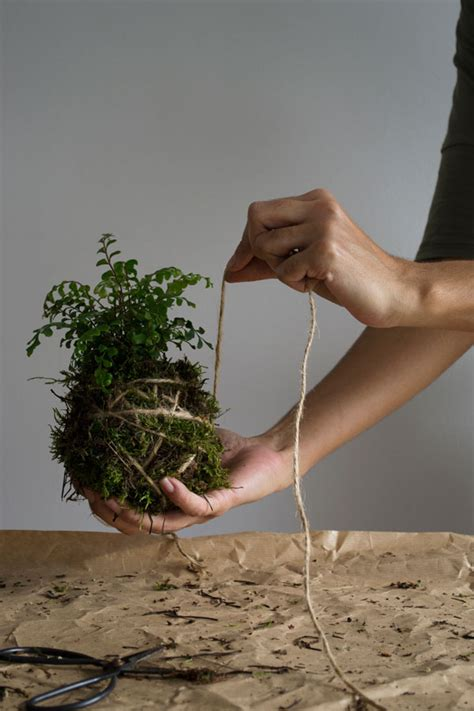 how to make a hanging l how to make a kokedama hanging garden curate display