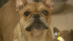 Police rescue 68 dogs from man who allegedly performed ...