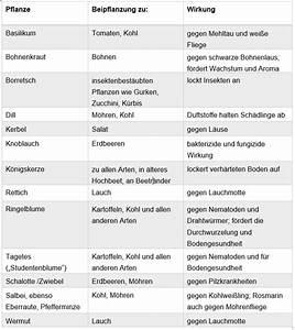 Befüllung Von Hochbeeten : hochbeet fruchtfolge sch dlingsvertreibende pflanzen ~ Lizthompson.info Haus und Dekorationen