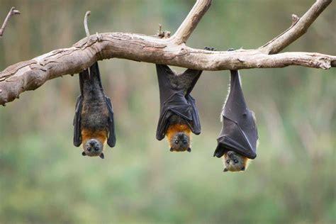 bats bay nature