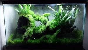 Waterless Aquarium     Or Terrarium
