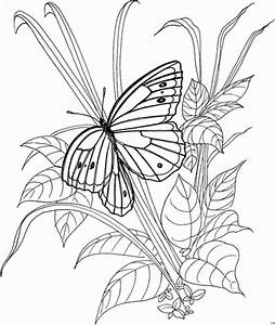 Was Machen Schmetterlinge Im Winter : schmetterling im strauch ausmalbild malvorlage ~ Lizthompson.info Haus und Dekorationen