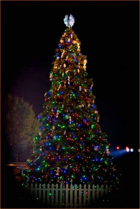 pool city christmas trees trees may be left curbside for recycling in missouri city sugar land houston chronicle