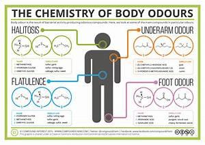The Chemistry Of Body Odours U2019 Sweat Halitosis