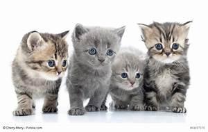 Katzen Fernhalten Von Möbeln : katzen kaufen was sollte man beachten ~ Michelbontemps.com Haus und Dekorationen