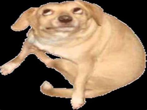 Dancing Dog Meme - dog youtube