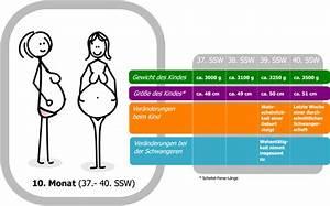 Schwangerschaftswoche Berechnen Nach Geburtstermin : 40 schwangerschaftswoche ssw die woche vor dem errechneten geburtstermin ~ Themetempest.com Abrechnung