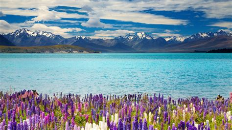 Wallpaper Lake Tekapo New Zealand Mountains Flower 4k