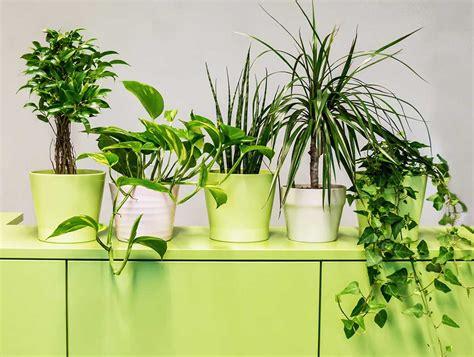 Luftreinigende Pflanzen Fürs Büro