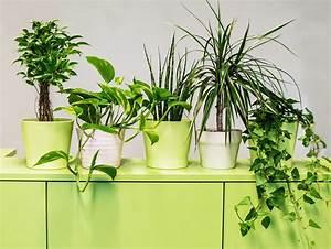 Pflegeleichte Pflanzen Für Die Wohnung : luftreinigende pflanzen f rs b ro die top 9 f r besseres ~ Michelbontemps.com Haus und Dekorationen