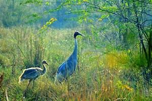 SALIM ALI BIRD SANCTUARY Photos, Images and Wallpapers ...