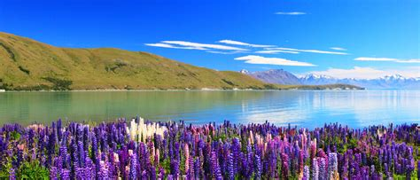 Best Promotion 63% [OFF] Lake Tekapo Hotels New Zealand Great Savings And Real