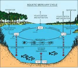 Aquatic Ecosystem Diagram