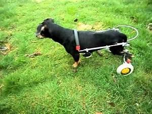 Hundeplanschbecken Selber Bauen : 02 hunderollwagen gehhilfe f r hunde youtube ~ Markanthonyermac.com Haus und Dekorationen