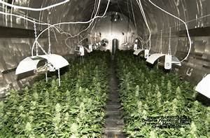 Ten years after one of Canada's largest grow-op bust ...