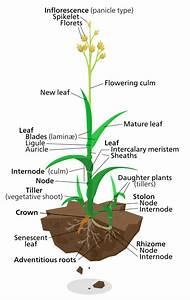 File Grassy Grass Plant Svg