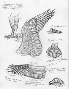 Bird Anatomy Drawing At Getdrawings