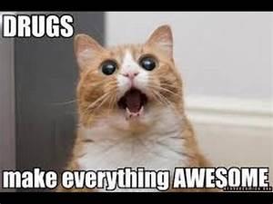 funny cat video... Funny Cat Videos
