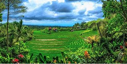 Indonesia Bali Landscape Indonesian Terrace Tropical Rice