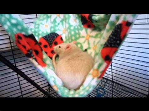 Pet Rat Hammocks by Pet Rat Hammock And Cuddle Cup Review
