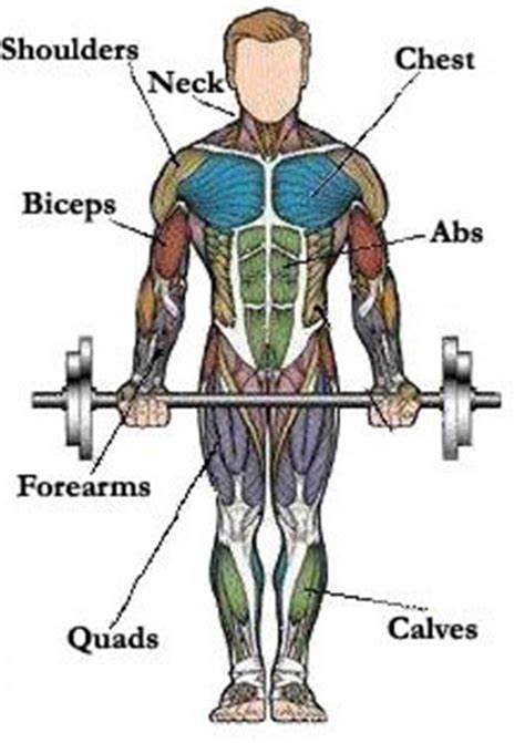 Largest range of free workout routines available! Map of Muscles - Pick Exercises for Different Muscle Groups