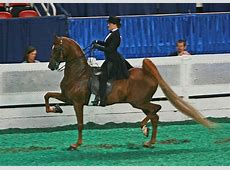 equitation definition What is