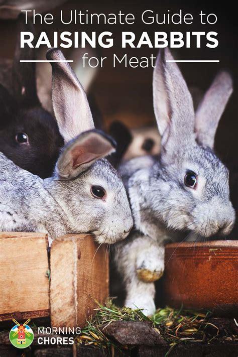 raising breeding rabbits  meat  ultimate guide
