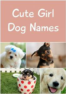 Best 25+ Cute girl dog names ideas on Pinterest | Golden ...