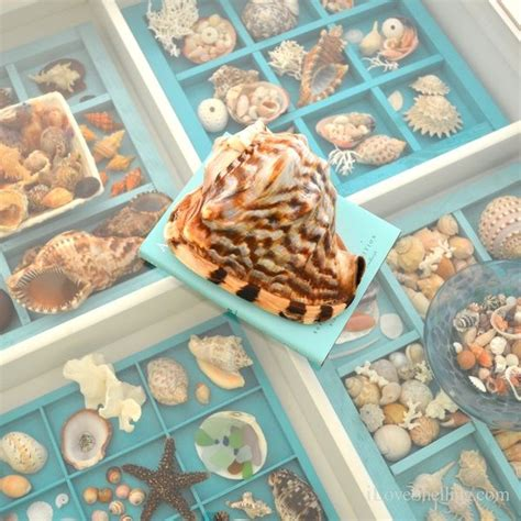 how to display shells ideas 25 unique seashell display ideas on pinterest shell display display sea shells and shell crafts
