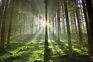 Bilder Vom Wald : duden wald land rechtschreibung bedeutung definition synonyme ~ Yasmunasinghe.com Haus und Dekorationen