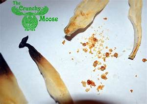 Ear Candling Instructions And How To