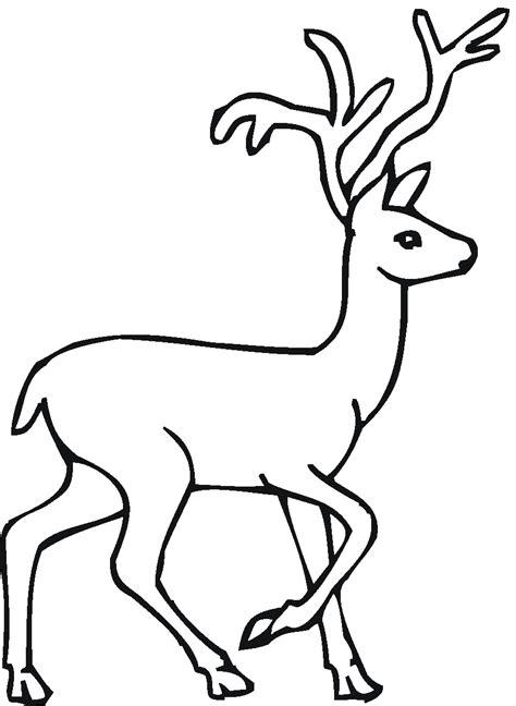 deer coloring pages getcoloringpagescom