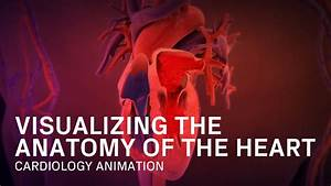 Anatomy Of The Heart - Medical Animation