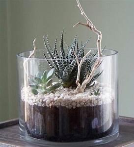 Sukkulenten Im Glas Pflanzen : pin von gabriele niederwimmer auf pflanzenk bel garten anpflanzen garten und pflanzen ~ Eleganceandgraceweddings.com Haus und Dekorationen